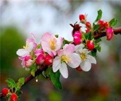 Что это за «звери» такие вредители яблонь?