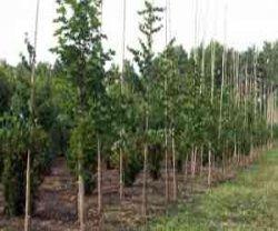 Саженцы Мичуринских яблонь покупают во всех регионах РФ