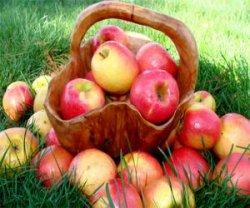 Праздник яблока