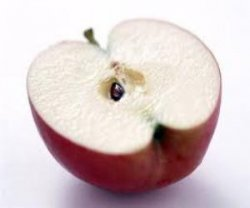 Можно ли есть яблочные косточки
