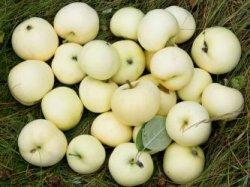 Необычные сорта яблок