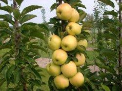 Влияние химических элементов на урожай яблок