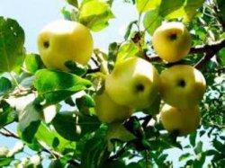 Совместимость плодовых деревьев и садовых растений